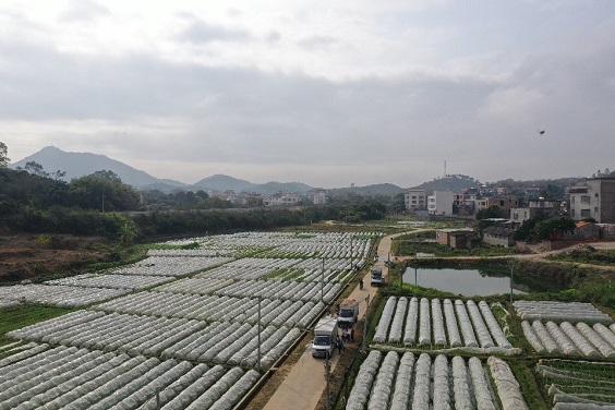 山美蔬菜销售.jpg